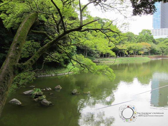 Japan Exchange 2013 - Tokyo with Bon Bon's photos 256
