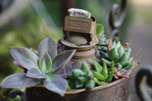 DIY Succulent Lantern