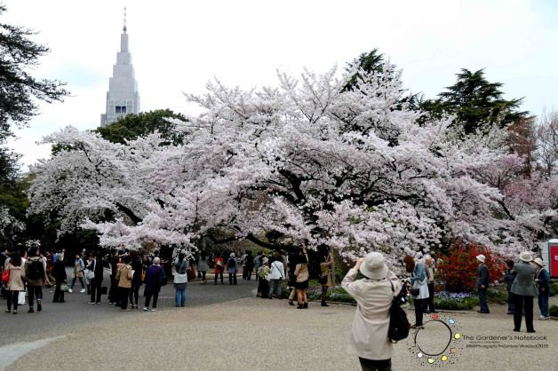 Gardenguru spring 2016-38.jpg