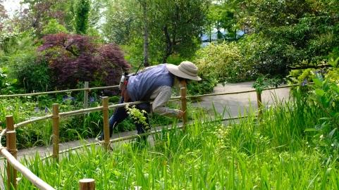 Kitagawa Village Monet's Garden Marmottan, kochi, swepea blue, annual flowers, gardens (10)