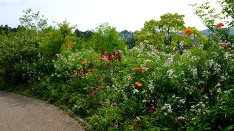 Kitagawa Village Monet's Garden Marmottan, kochi, swepea blue, annual flowers, gardens (13)