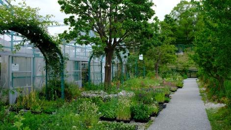 Kitagawa Village Monet's Garden Marmottan, kochi, swepea blue, annual flowers, gardens (19)
