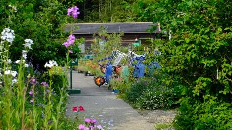Kitagawa Village Monet's Garden Marmottan, kochi, swepea blue, annual flowers, gardens (24)