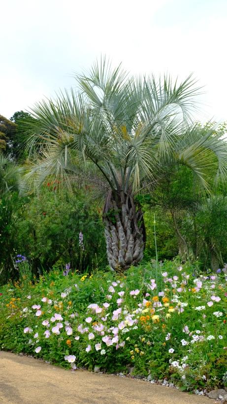Kitagawa Village Monet's Garden Marmottan, kochi, swepea blue, annual flowers, gardens (4)
