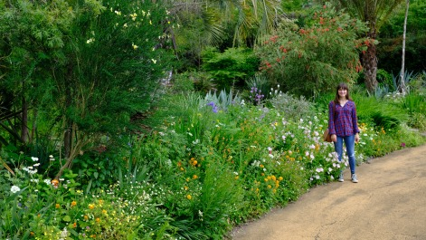 Kitagawa Village Monet's Garden Marmottan, kochi, swepea blue, annual flowers, gardens (8)