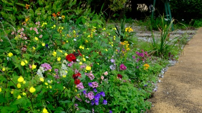 Kitagawa Village Monet's Garden Marmottan, kochi, swepea blue, annual flowers, gardens (9)