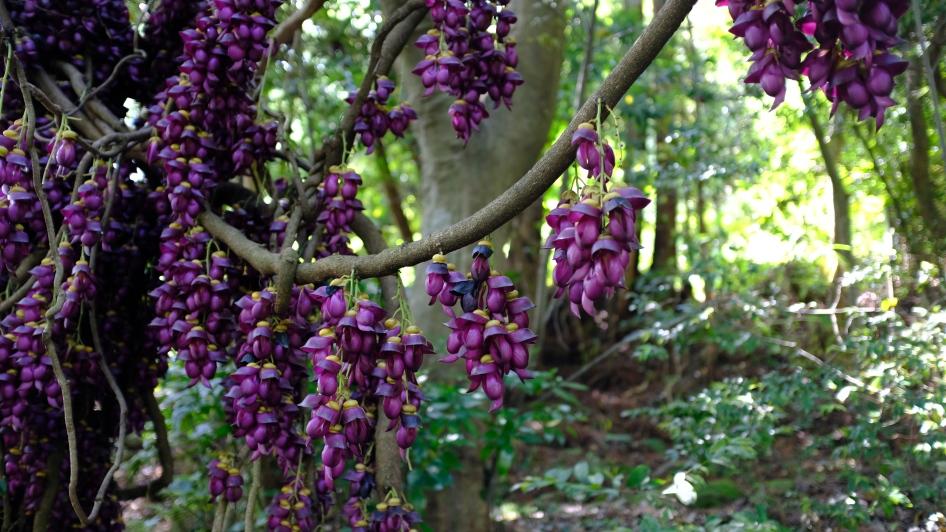 kochi japan botanical gardens (12)
