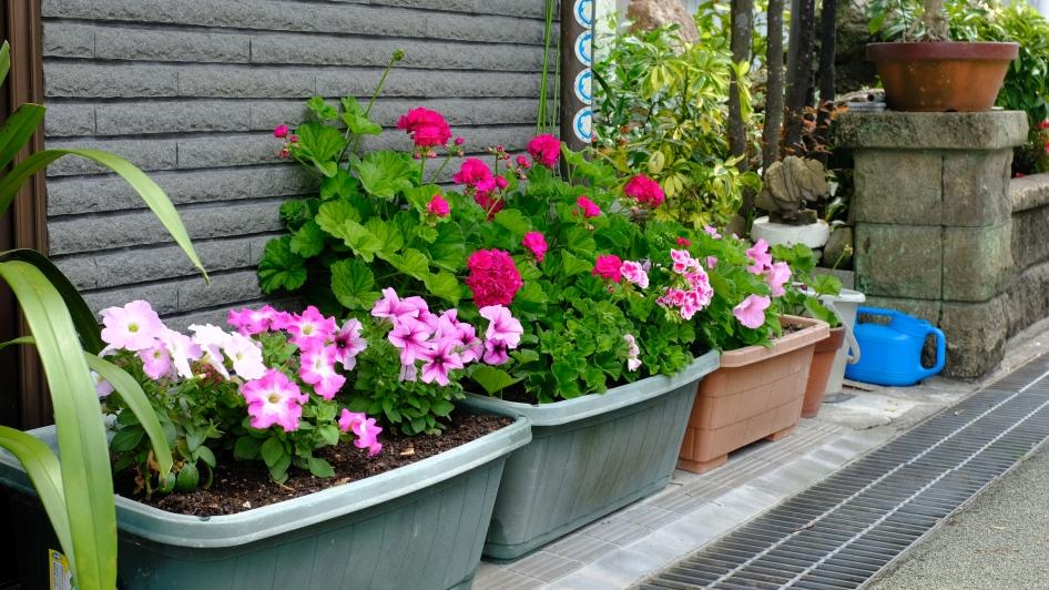 Kochi, japan, flower container, streets, street signs, rural japan, wind farm (4)