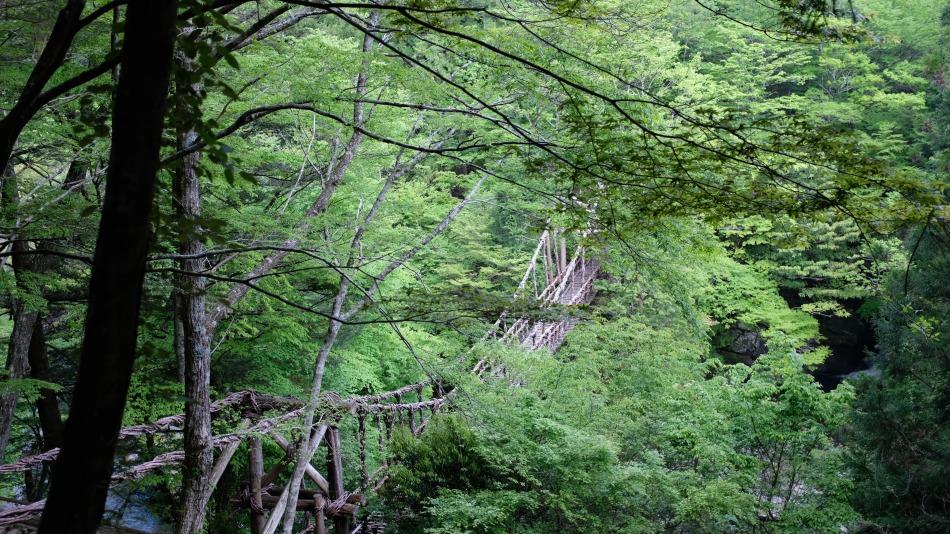 Oku-Iya vine bridges.JPG