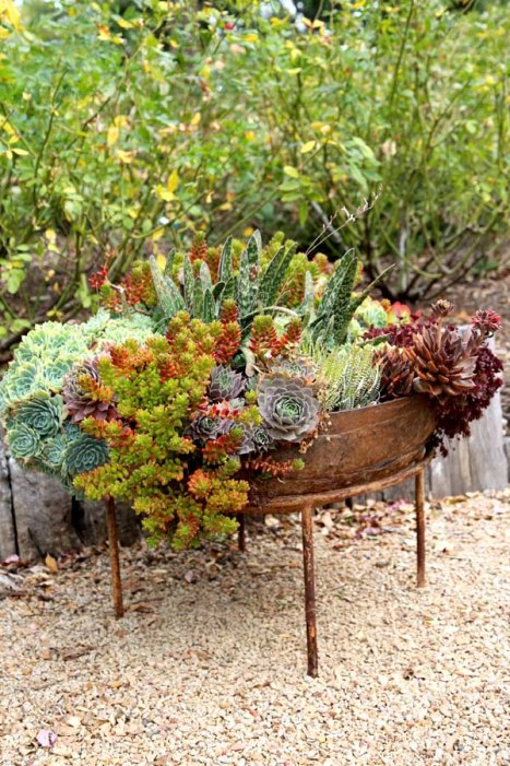 Rustic fire bowl, succulents, succulent bowl, succulent planter