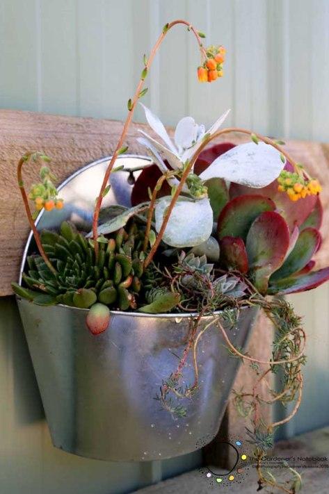 wall garden, sussulent pot, succulents