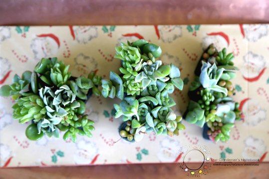 Succulent floral art 2
