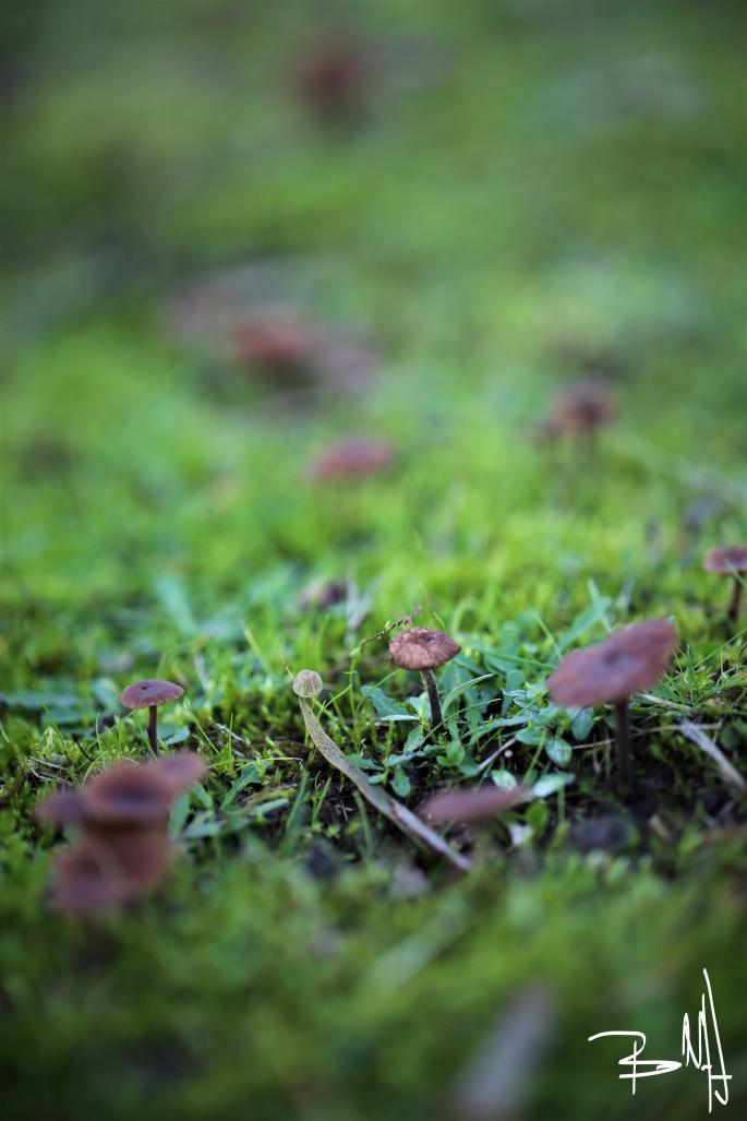 Wild Mushrooms marked.jpg